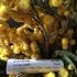 Купить Fleur Narcotique от Ex Nihilo