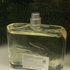 Купить Essential от Lacoste